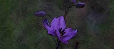 Wildflower-digital-art-chocolate-lily