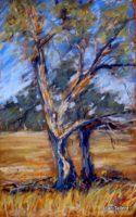 Gum tree, Mansfield. Pastel