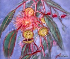Gum Not Blossoms. pastel.  54 x 45 cm ( framed)
